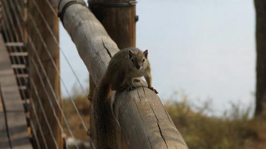 Notre copain écureuil