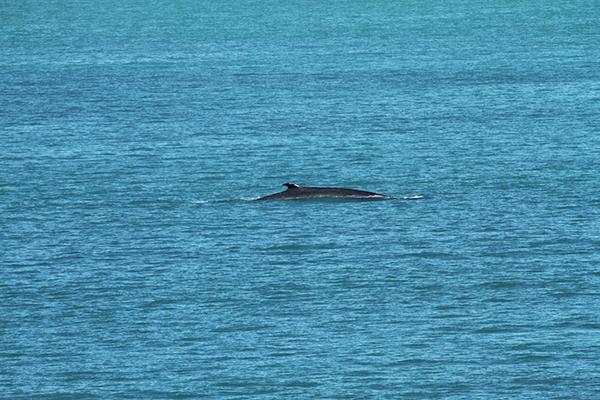 baleine_traversee