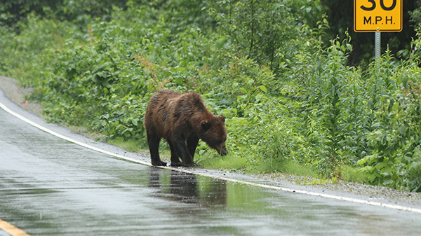 grizzly_route