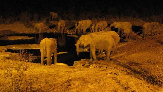 Eléphants de nuit