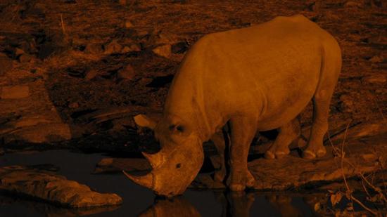 Premier rhino