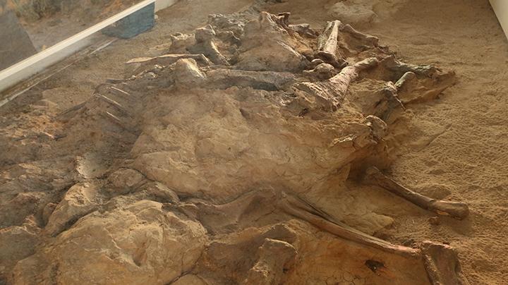 fossilepark