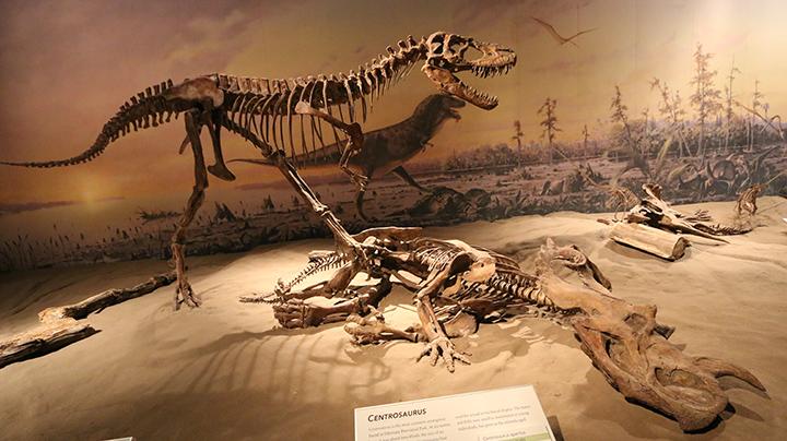 reconstituionfossiles