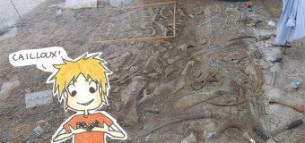 Dimanche 3 Août : Fossiles et moustiques !