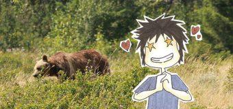 Mardi 5 Août : Des ours en pagaille