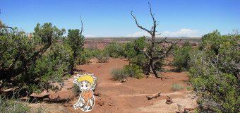 Mardi 13 Août : Dead Horse State Park & Canyonlands