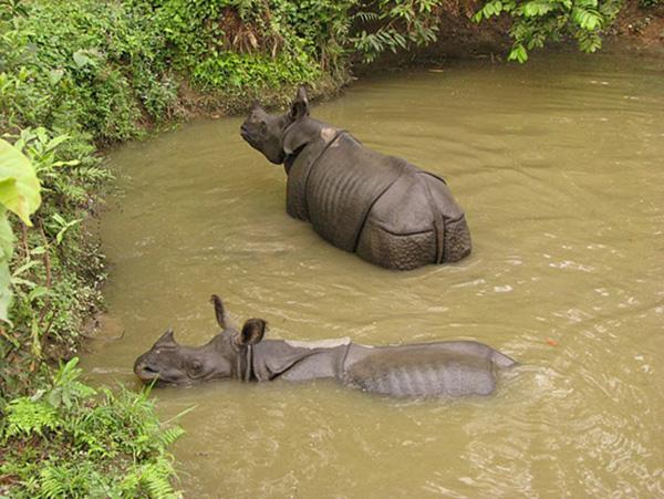 rhino_eau