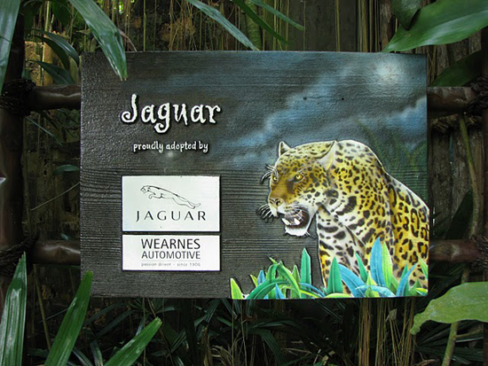 Jaguar Sponsorisé
